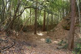 【滝山城】滝山城大手の小峰曲輪です。<br><br>滝山城は、北条氏康の息子、北条氏照の居城でした。1869年、武田信玄は大群を率いて、関東に侵攻し、北条氏照が守る滝山城を包囲しました。<br><br>ここ小峰曲輪も激戦の末、武田勢に落とされ、二の曲輪まで後退した北条勢でしたが、何とか持ちこたえました。400年ほど前、ここは硝煙・絶叫、血と汗の修羅場だったかもしれません。<br>今は竹の葉が揺れ、擦れ合う音が聞こえる閑静な場所です。<br><br>武田優勢にも関わらず、信玄は滝山城包囲を解き、小田原城に向かったのでした。