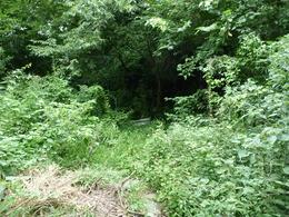 【松田城入り口】<p>ジャングルのような松田城入り口。最初は迂回することを考えたが、この先がどうなっているのか知りたい誘惑に抗することはできなかった。</p>