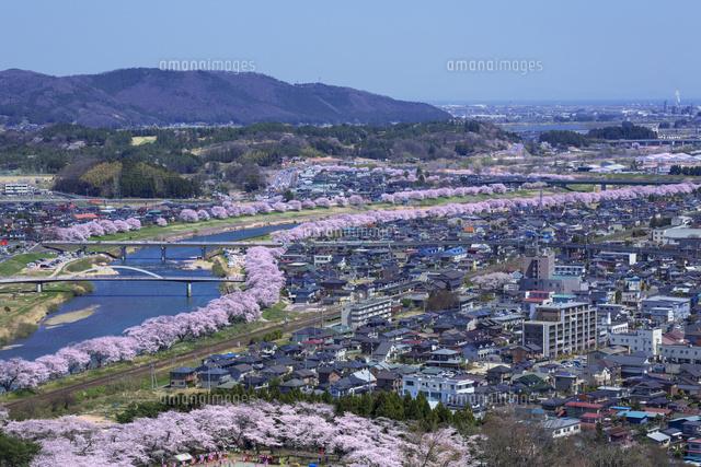 白石城だけじゃない!花の城下町、白石市の桜の名 …