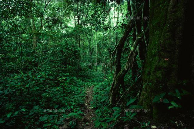 ジャングルの中の猟師道 カボン アフリカ[01629000488]| 写真素材
