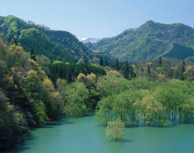 緑萌える白神山地山麓と美山湖  青森県