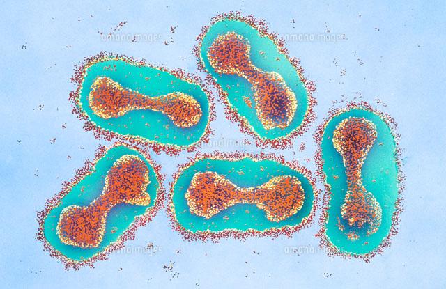 天然痘ウィルス[01808013889]| ...