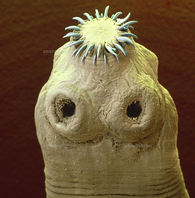 サナダムシの画像 p1_36