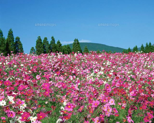 「花畑 ピンク」の画像検索結果