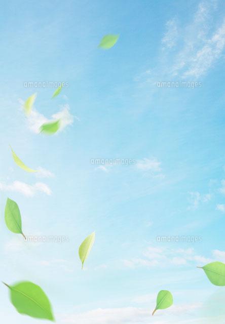 青空と風に舞う葉