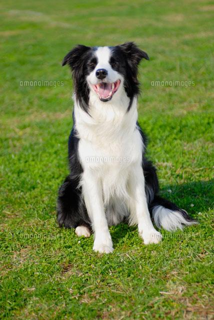 笑う 犬 画像