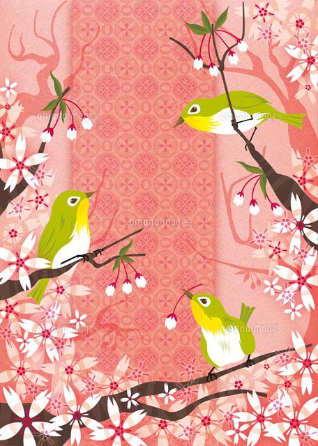 桜とメジロ (c)megumi masubuchi