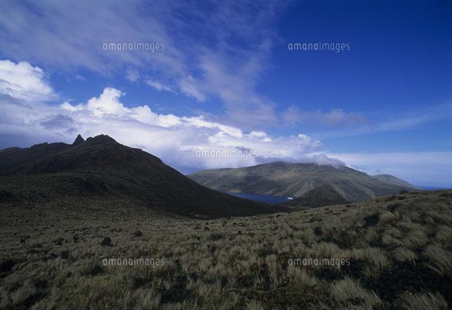 マッコーリー島の画像 p1_28