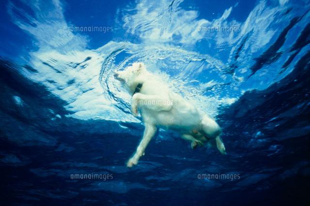 シミュレーションツール 海で泳ぐ犬[22420000044]| 写真素材・ストックフォト・画像・
