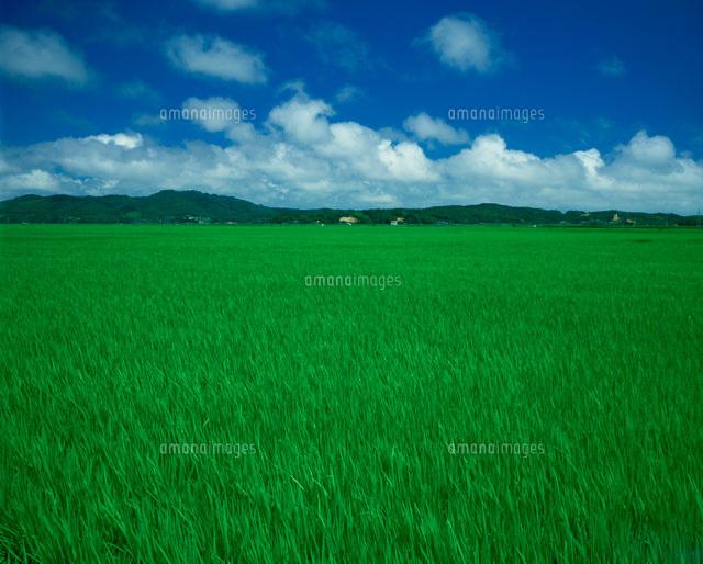 大郷町の田園風景[25041005965]| 写真素材・ストックフォト・画像 ...