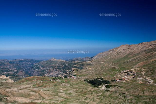レバノンスギの画像 p1_16