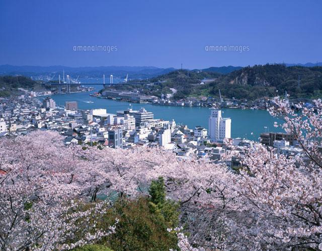 千光寺公園の桜と尾道水道尾道市[25351006043]| 写真素材 ...