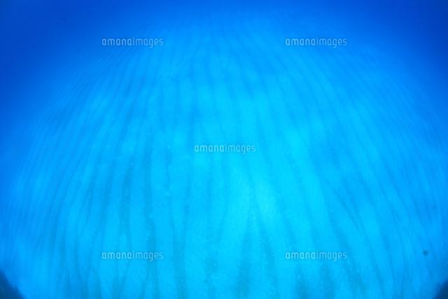 バハマの白砂の海底 (c)TAKAJI OCHI/SEBUN PHOTO