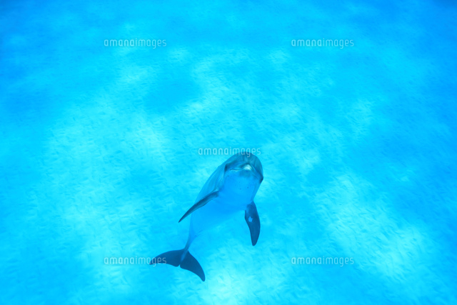 バハマの青い海を泳ぐイルカ (c)TAKAJI OCHI/SEBUN PHOTO
