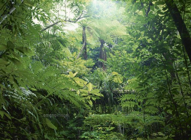 亜熱帯ジャングル[25380006251]| 写真素材・ストックフォト・画像