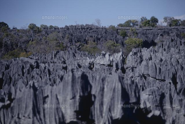 ツィンギ・デ・ベマラ厳正自然保護区の画像 p1_7