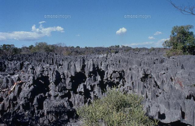 ツィンギ・デ・ベマラ厳正自然保護区の画像 p1_17