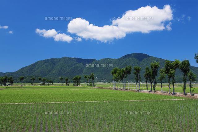 夏井のはざ木と弥彦山 新潟平野(越後平野)