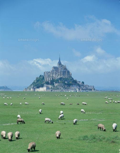 モンサンミッシェルと放牧 7月 ブルターニュ地方 フランス