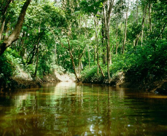 チニ湖のジャングル[25969008127]| 写真素材・ストックフォト
