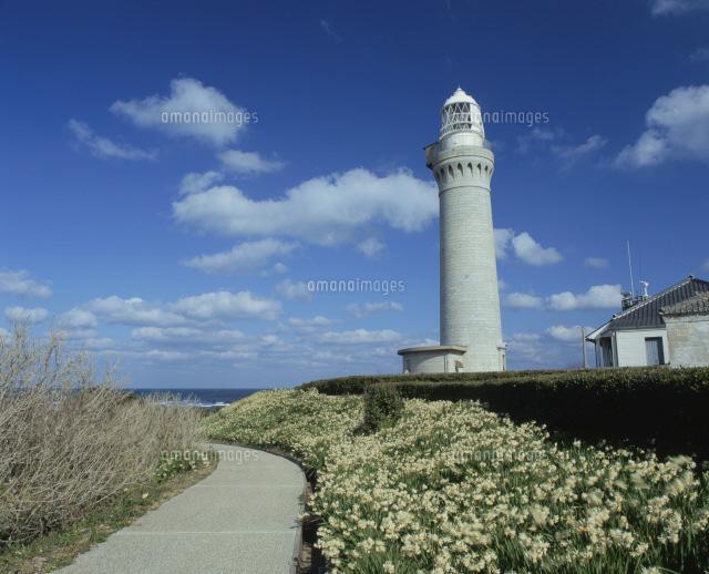 角島灯台とスイセンの花(角島) (c)YOSHITAKA TSUMORI/SEBUN