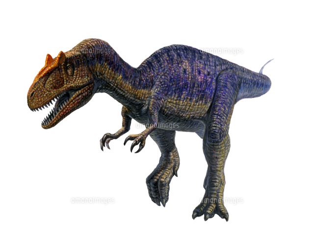 アロサウルス[32041000056]  写...