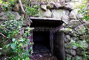 旧日本軍の弾薬庫入り口(玄界灘の原始林 沖ノ島)照葉樹 戦争遺跡
