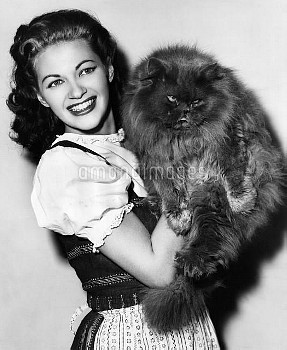 Yvonne De Carlo with a contestant in the Hollywood Cat Show, a blue Persian, December 1949