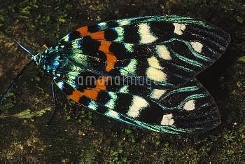 Moth, Tam Dao National Park, Vietnam