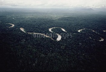 Aerial view of meandering river in the Amazon forest, Amazon ecosystem, Brazil