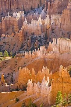 Sandstone hoodoos, Bryce Canyon National Park, Utah