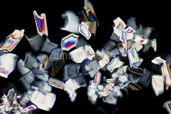 Energy Drink (Light Micrograph)