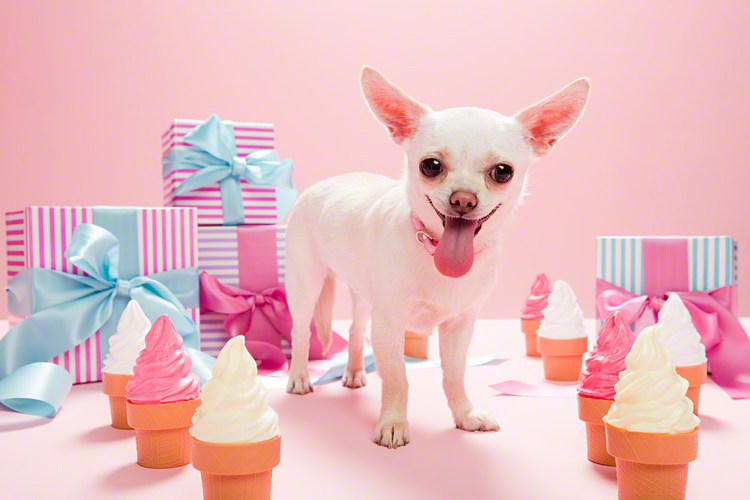 【5歳の女の子】楽しみながら成長できる誕生日プレゼント12選の画像4