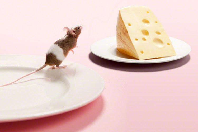 【初期・中期・後期】チーズを使った離乳食レシピ9選!種類別いつから食べられるかまとめのタイトル画像
