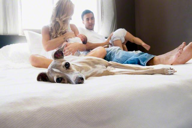 新生児・赤ちゃんとペットの同居はOK?メリット・注意点・コツまとめの画像1