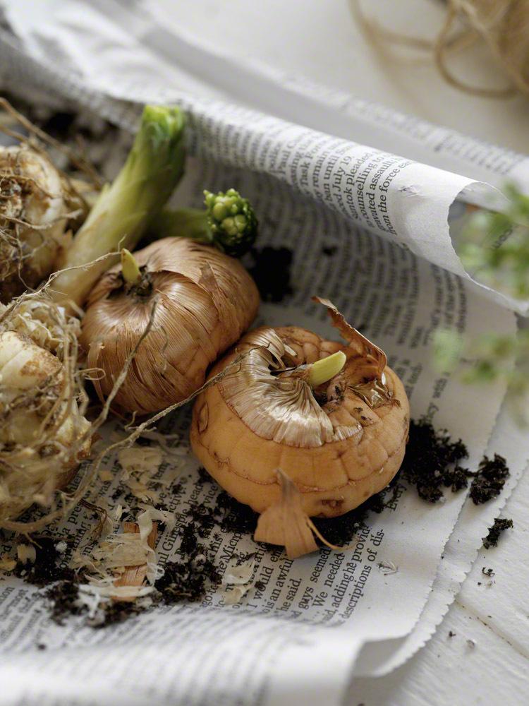 ほんのひと手間でいつもより新鮮&長持ち!野菜のオススメ保存方法の画像2
