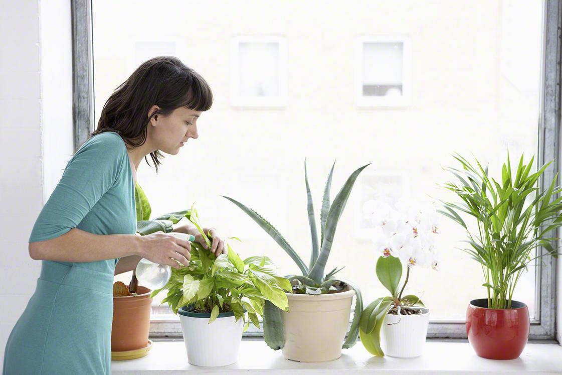 忙しいママでも!ズボラさんでも!育てやすく長持ちする観葉植物を楽しもう♪のタイトル画像