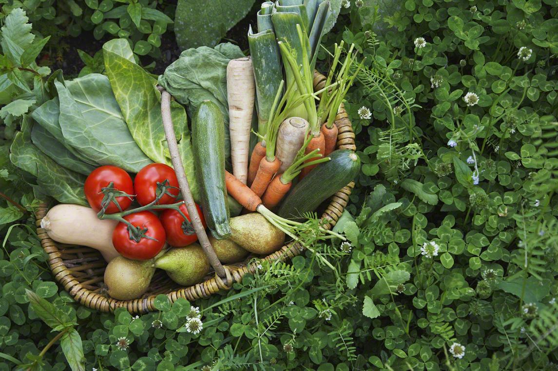 トルコに住む我が子は「野菜好き」!理由を考えると子どもが野菜を食べられるようになる方法が見えてきた!のタイトル画像