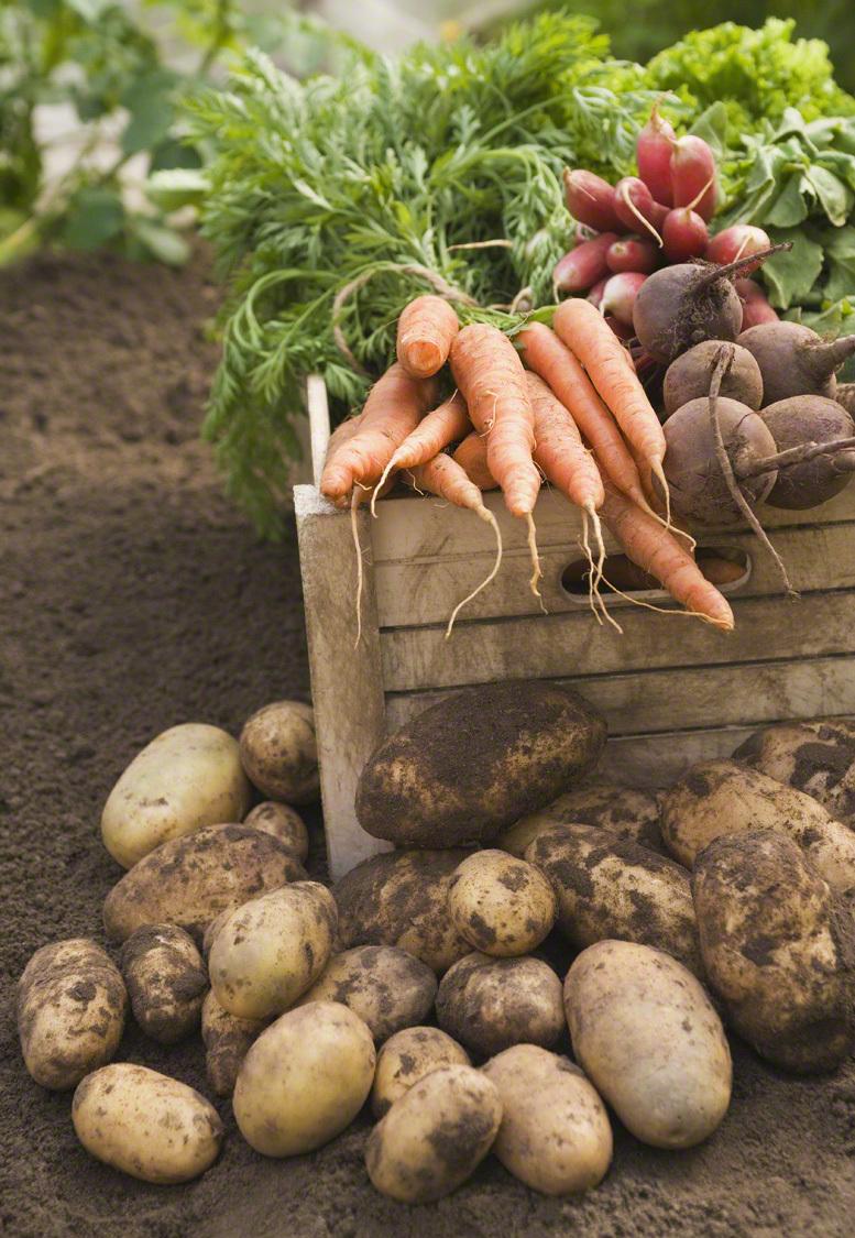 主婦必見!余りがちな野菜や食材を、最後までおいしく使い切るためのポイントのタイトル画像