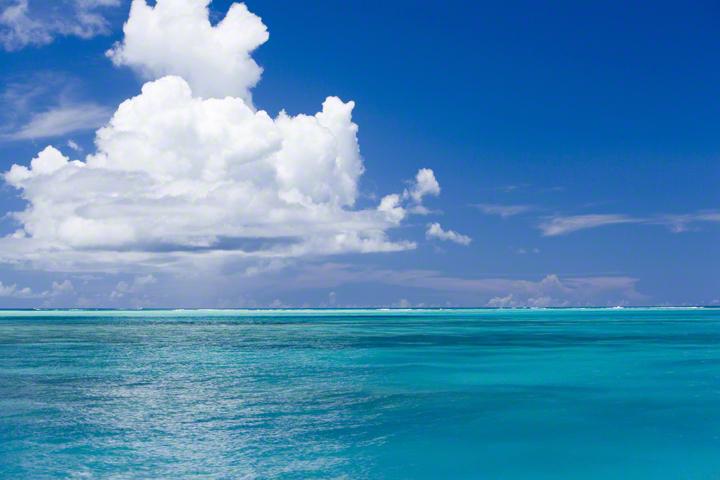 """「広い海に出よう」さかなクンがおくった""""あるメッセージ""""に感動の画像2"""