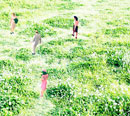芝生を歩く人々