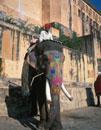 象タクシー アンベール城 ジャイプール インド
