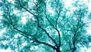 横浜臨港パークの楓科の樹木