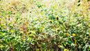 秋の河川敷の雑草