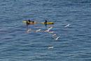水面を滑空するペリカンとカヤックに乗る人