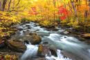 紅葉と奥入瀬渓