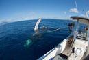 Humpback Whale (Megaptera novaeangliae) researchers filming