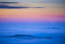 夜明けの霧とドイツトウヒの森