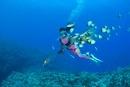 熱帯魚とダイバーとサンゴ