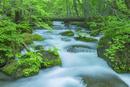 新緑の奥入瀬渓流